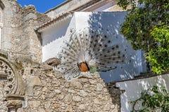 Portugal, Ã-‰ vora Pfaus auf den Ruinen eines alten Tempels Stockfotografie