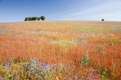 Portugal alentejo pola wiosny zdjęcia stock