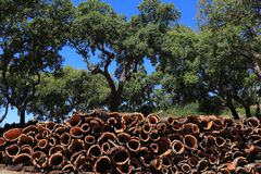 Free Portugal, Alentejo Region. Newly Harvested Cork Oak Trees. Quercus Suber. Royalty Free Stock Images - 185799259