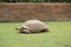 Portugal, Algarve - tortuga Fotografía de archivo