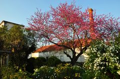 Portugal colonial house peach tree Royalty Free Stock Photos