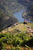 Portugal: Douro river valley. Wine groves in Douro river valley - home of port vine stock photography