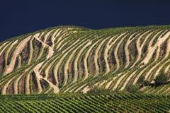 Portugal: El Duero River Valley Foto de archivo
