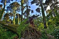 Portugal forest. Sintra jungle nature landscape Stock Images
