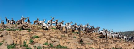 Portugal: herd of goats on top of the rocks stock photo