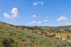 Portugal - Landwirtschaft Lizenzfreie Stockfotos