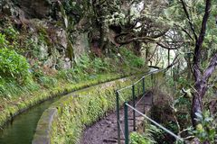 Portugal, Madeira, Levada 25 Fontes near Rabacal. Beautiful levada 25 Fontes in the rain forest near Rabacal, Madeira, Portugal royalty free stock photography