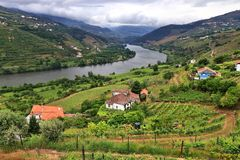 Portugal wine region. Vineyards on hills along Douro river valley. Alto Douro DOC stock image