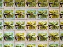 Portugalczyk płytki obrazy royalty free