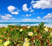 Portugalia Plaża przy brzegowym Atlantyckim oceanem Kwiat Zdjęcie Stock