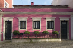 Portugees Roze Royalty-vrije Stock Foto's