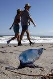 Portugese mens-van-oorlog op strand Stock Afbeelding