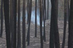 Portugiesischer Waldburning Stockfoto