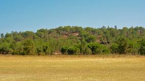 Portugiesisches maquis shrubland auf dem Strand von ` ` Barragem d e Montargil See Stockbild