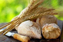 Portuguese bread and spikes of wheat. Stock Image