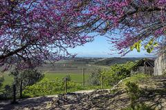Portuguese Countryside - Obidos - Portugal. Portuguese countryside near the medieval walled town of Obidos in the Oeste region of Portugal Stock Photography
