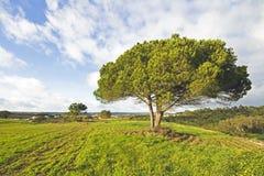 Portuguese landscape in spring Stock Images
