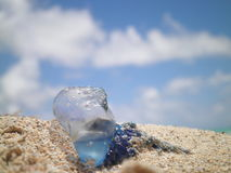 Portuguese Man O'War on sandy beach. Against blue skies stock photos