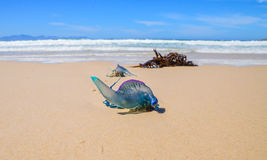 Portuguese man-of-war Stock Photos