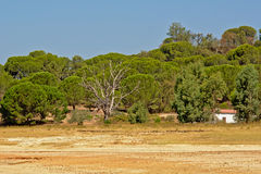 Portuguese maquis shrubland on the beach of Montargil lake Royalty Free Stock Image