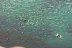 Portuguese scuba diver Royalty Free Stock Images