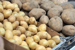 Portuguese Traditional Potatoes royalty free stock images