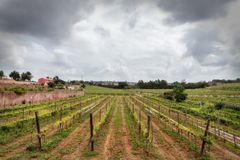 Portuguese wine fields in the Algarve. Stock Images