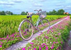Free Portulaca Grandiflora Flower Road Royalty Free Stock Photos - 77075518