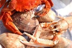 Portunus, littleneck tweekleppige schelpdieren en de garnalen van de Baai van Dublin Stock Fotografie