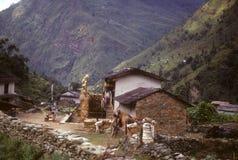 portvakter som vilar ridgetop som trekking Royaltyfri Foto