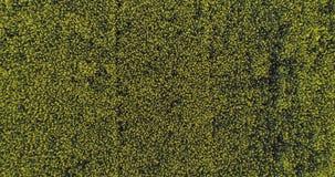 Poruszający koszt stały nad żółtym kwiatu polem w letnim dniu Europa Włochy natury głąbika anteny plenerowy zielony establisher 4 zdjęcie wideo