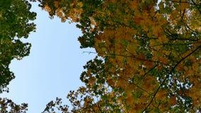 Poruszający tło z jesieni naturą w 4K materiale filmowym zbiory
