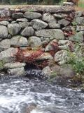 poruszająca wody obraz royalty free