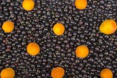 Porzeczkowy czerń, wiśnia, malinki Jagody tło Świeży organicznie rodzynek od wioska ogródu Rodzynek organicznie Zdjęcie Stock