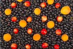 Porzeczkowy czerń, wiśnia, malinki Jagody tło Świeży organicznie rodzynek od wioska ogródu Rodzynek organicznie Fotografia Royalty Free