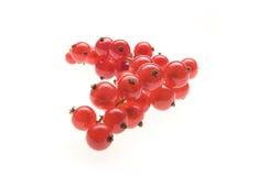 porzeczkowy czerwony biel Zdjęcia Stock