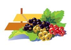 Porzeczkowy grono z zielonym liściem - ilustracja Fotografia Stock