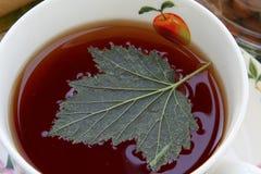 Porzeczkowy liść w świeżo warzącej czarnej herbacie w porcelany naczyniu Zdjęcie Royalty Free