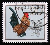 Porzellan-farbiges Zwerghuhn, deutscher Hahn, inländisches Vögel serie, circa 1979 Lizenzfreies Stockfoto