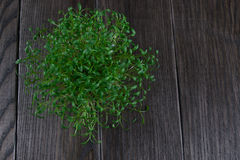 Porzione di crescione di giardino fresco Erbe fresche Fotografia Stock