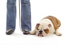 posłuszeństwa psi szkolenie zdjęcia royalty free