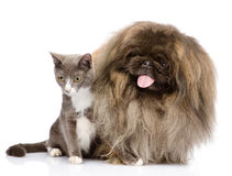 Posa del cane e del gatto Isolato su priorità bassa bianca Fotografie Stock