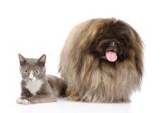 Posa del cane e del gatto Isolato su priorità bassa bianca Immagine Stock Libera da Diritti