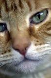 Posa del gattino Fotografie Stock