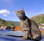 Posa del gatto Fotografia Stock