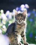 Posa del gatto di Kitty Fotografia Stock Libera da Diritti