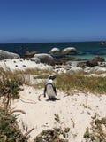 Posa del pinguino Immagine Stock Libera da Diritti