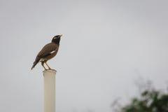 Posa dell'uccello immagine stock libera da diritti