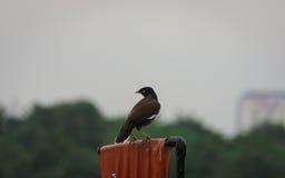 Posa dell'uccello immagine stock