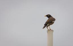 Posa dell'uccello fotografia stock libera da diritti